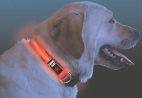Night Dawg Red L.E.D. Collar, large